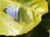 mg_0238-boomblauwtje