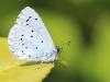 mg_2334-boomblauwtje