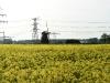 koolzaad-groene-energie