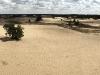 kootwijker-zand