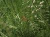mg_6296-bruine-korenbout-vrouw-medium