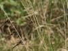 mg_7507groep-libelles-medium